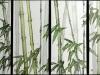 15_Bamboo_2016_SRACS_3rd